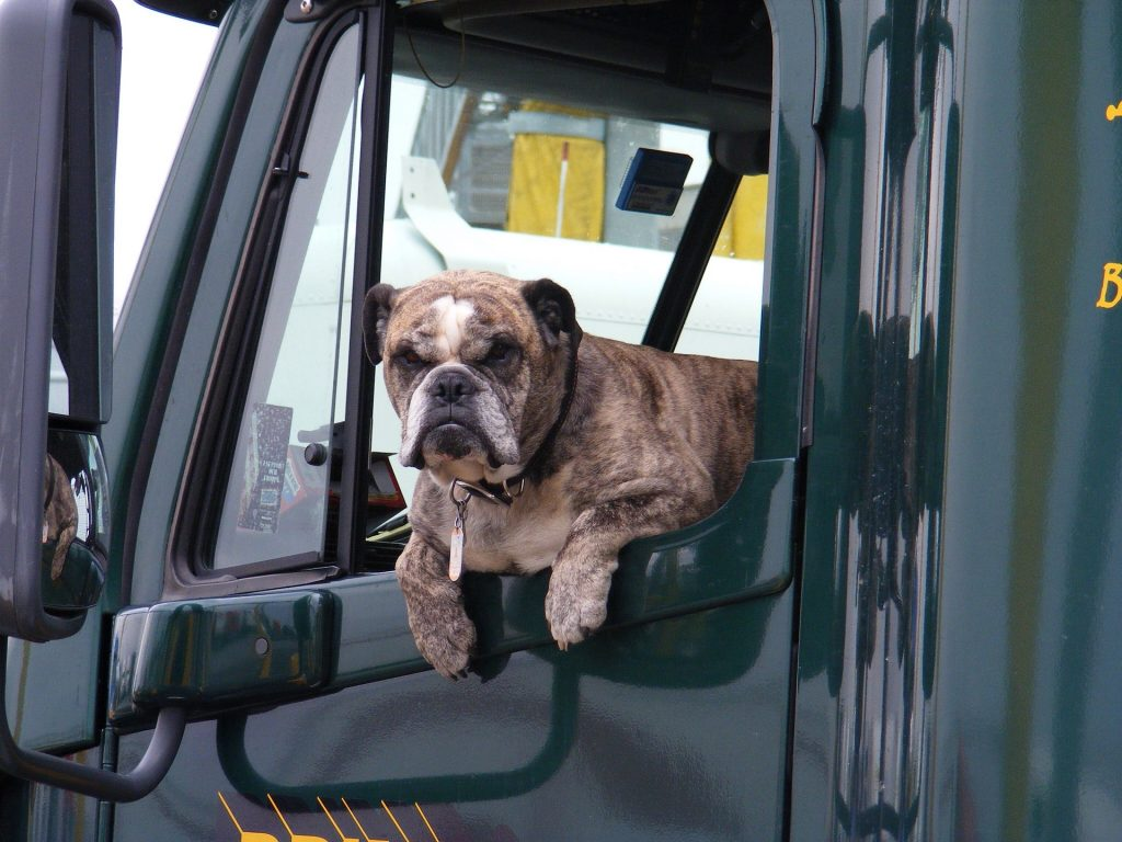 Trucking With Pets