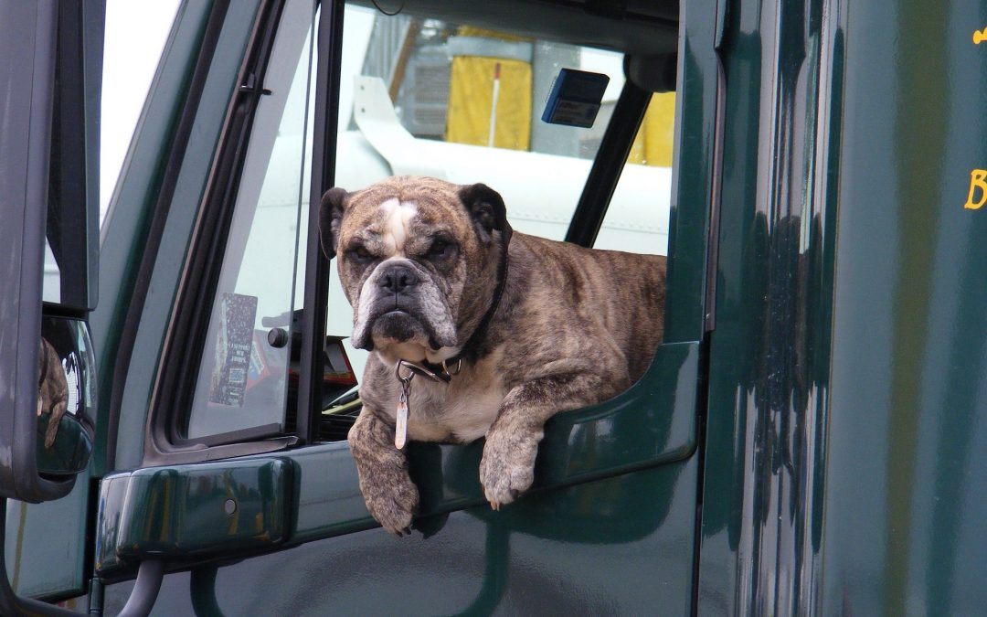 Trucking With Pets: What Fleets Need To Know